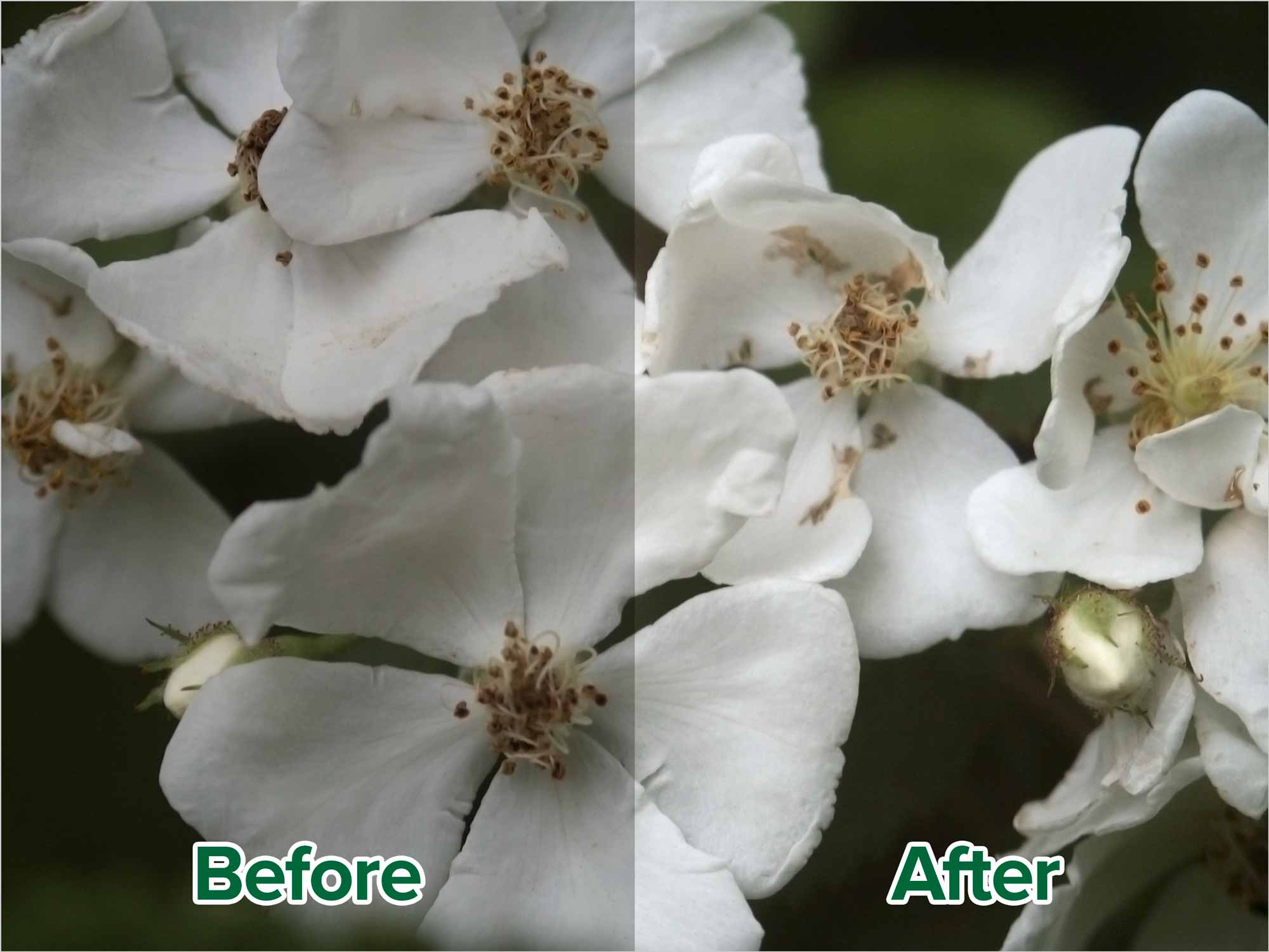 photoshop-colour-correction-white-point-before-after
